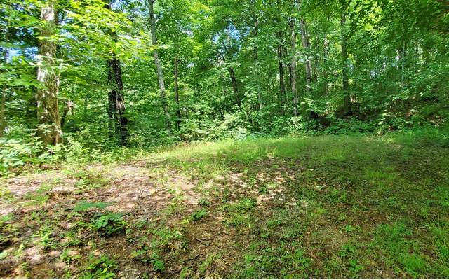 LOT D The Springs, Hayesville, NC 28904 (MLS #299320) :: Path & Post Real Estate