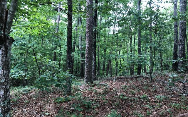 0 Turtle Ridge, Ellijay, GA 30540 (MLS #299352) :: RE/MAX Town & Country