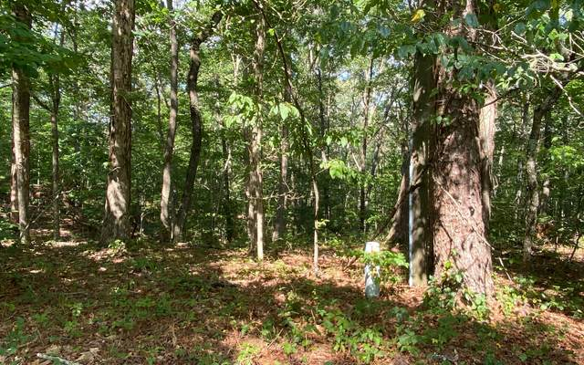 LT 1 Harris Branch Rd, Ellijay, GA 30540 (MLS #299613) :: Path & Post Real Estate