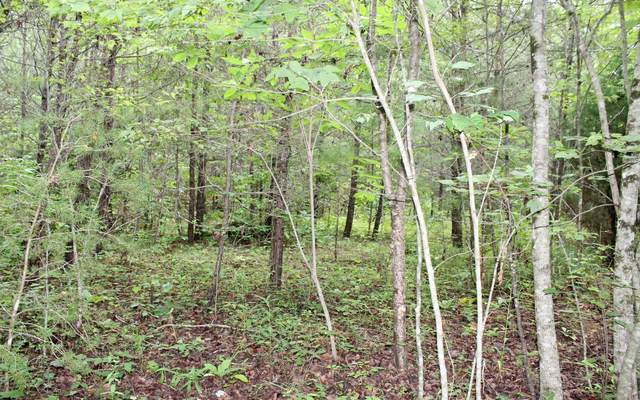 LOT 4 Downings Place, Hayesville, NC 28904 (MLS #299704) :: Path & Post Real Estate