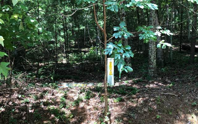 LOT 9 Dover Falls Trail, Ellijay, GA 30540 (MLS #299718) :: RE/MAX Town & Country