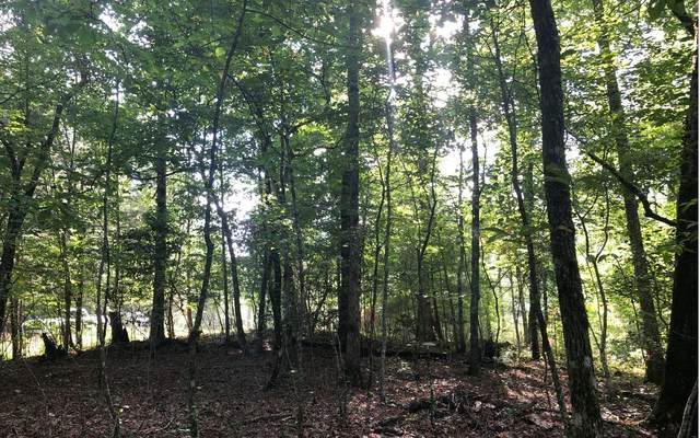 LT 13 Pine Lane, Mineral Bluff, GA 30513 (MLS #300029) :: RE/MAX Town & Country