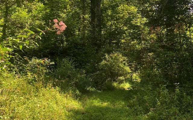 River Cove Lot 4, Hayesville, NC 28904 (MLS #300052) :: Path & Post Real Estate