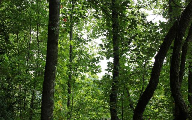 East Lakeview, Hayesville, NC 28904 (MLS #300690) :: Path & Post Real Estate