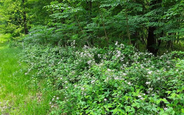 LT19 Serenity Ridge, Blairsville, GA 30512 (MLS #300805) :: Path & Post Real Estate