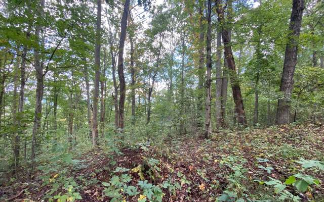 10.6 Wikle Road, Hayesville, NC 28904 (MLS #300917) :: RE/MAX Town & Country