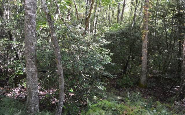 TR 7A Willow Ridge, Warne, NC 28909 (MLS #301005) :: Path & Post Real Estate