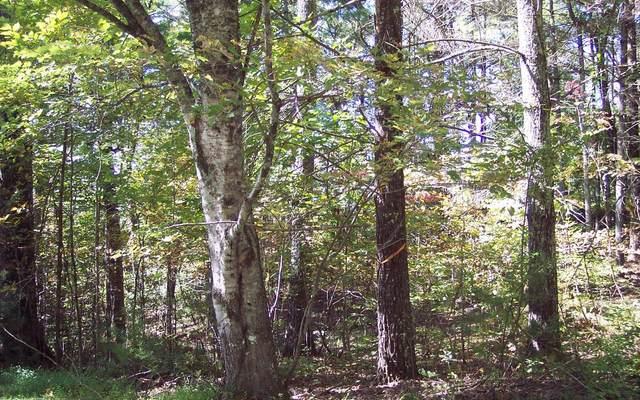 000 Weber Way, Brasstown, NC 28902 (MLS #302094) :: Path & Post Real Estate