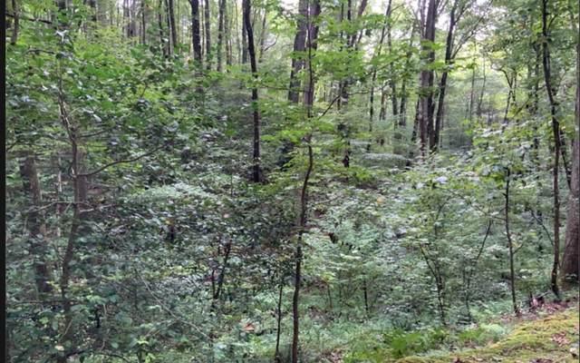 135 Hidden Valley Rd., Cherry Log, GA 30522 (MLS #302110) :: Path & Post Real Estate