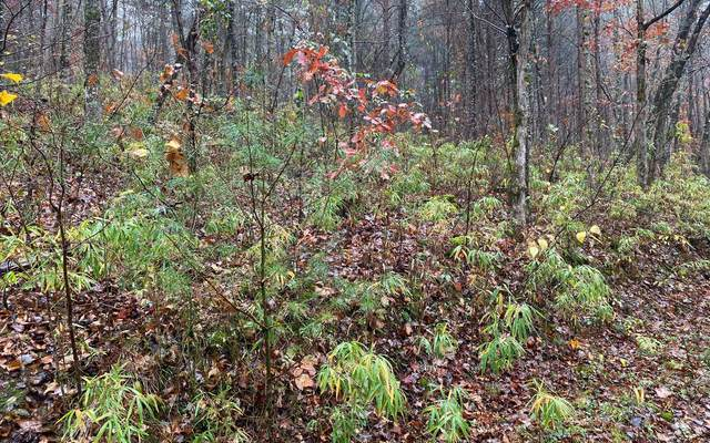 LT38A Trillium Heights, Hayesville, NC 28904 (MLS #302266) :: Path & Post Real Estate