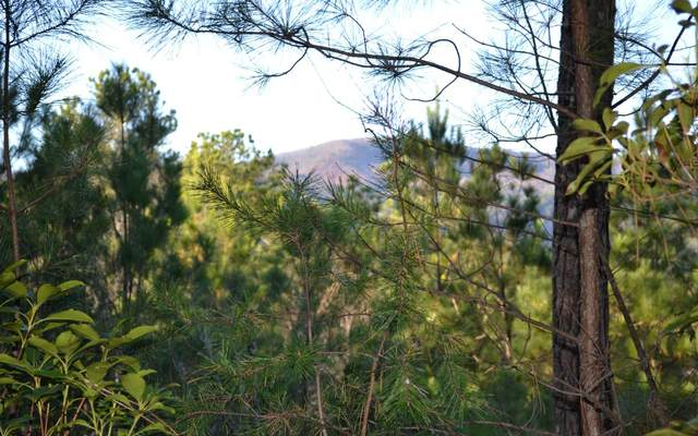LOT 7 Skyline Dr, Turtletown, TN 37391 (MLS #302483) :: Path & Post Real Estate