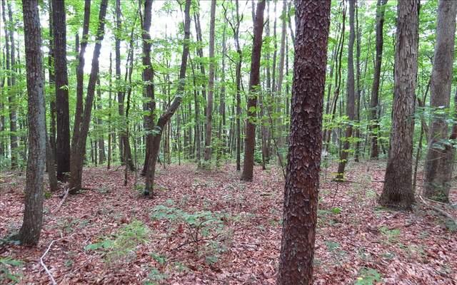 LT 11 Rainbow Hill, Ellijay, GA 30536 (MLS #302720) :: Path & Post Real Estate