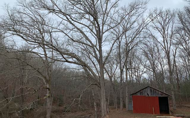 Old River Camp Road, Copperhill, TN 37317 (MLS #303155) :: RE/MAX Town & Country