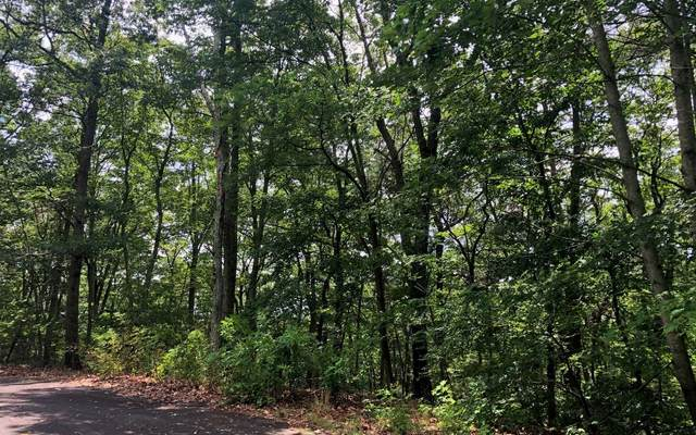 LT 35 Farmview Road, Ellijay, GA 30540 (MLS #303489) :: Path & Post Real Estate