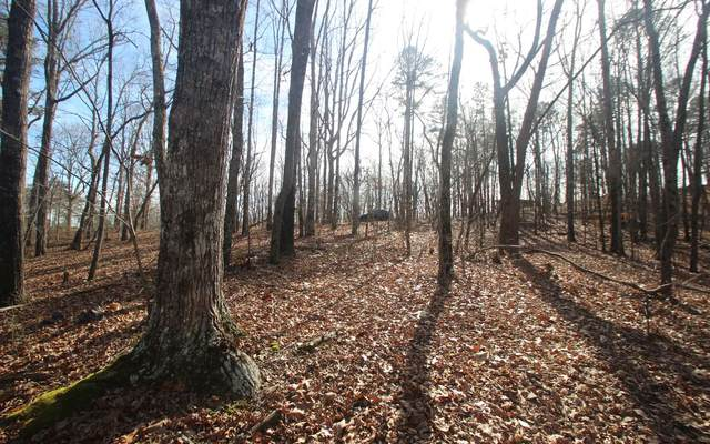 LT 2 Log Round Mtn Trail, Ellijay, GA 30540 (MLS #303610) :: Path & Post Real Estate