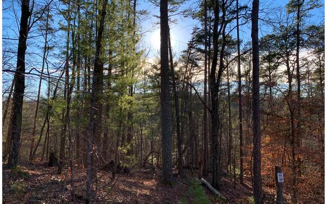1684 Shade Tree, Ellijay, GA 30540 (MLS #303694) :: RE/MAX Town & Country