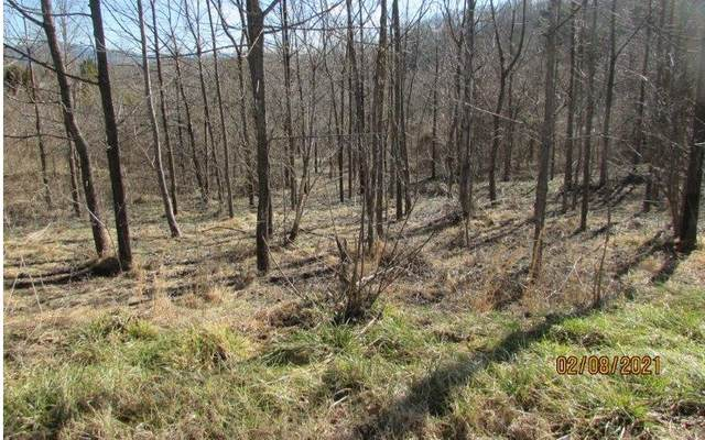 TR 2 Nicely Road, Hayesville, NC 28904 (MLS #304614) :: RE/MAX Town & Country
