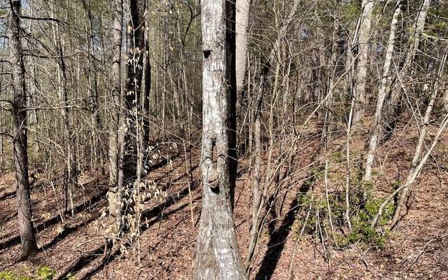 Timber Ridge Lane, Hayesville, NC 28904 (MLS #304631) :: RE/MAX Town & Country