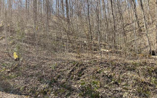 LOT 3 Cabin Cove, Hayesville, NC 28904 (MLS #304633) :: RE/MAX Town & Country