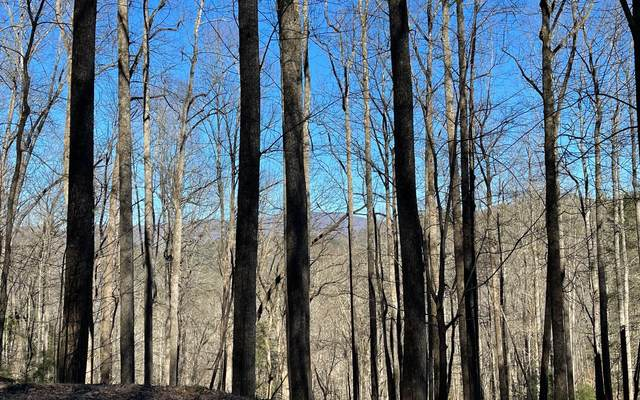 TR 10 Soapstone, Hiawassee, GA 30546 (MLS #304790) :: Path & Post Real Estate