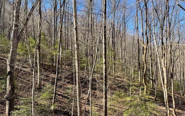 TR 12 Soapstone, Hiawassee, GA 30546 (MLS #304792) :: Path & Post Real Estate