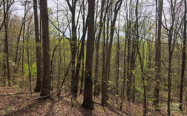 63-64 Forestry Rd 100, Blairsville, GA 30512 (MLS #306173) :: RE/MAX Town & Country