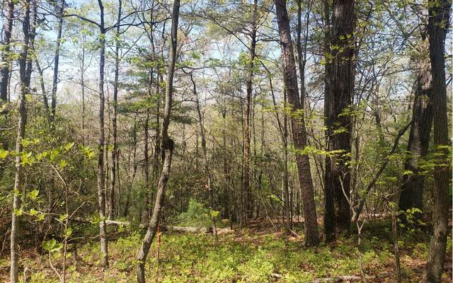 1.37 AC MURPHY HWY, Mineral Bluff, GA 30559 (MLS #306364) :: RE/MAX Town & Country