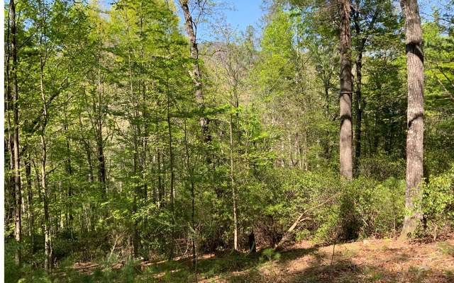 226 Pine Ridge Road, East Ellijay, GA 30536 (MLS #306379) :: RE/MAX Town & Country