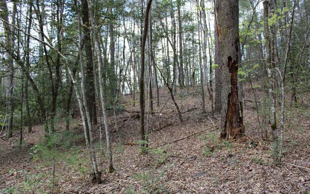 0 Pine Tree Drive, Epworth, GA 30513 (MLS #306430) :: RE/MAX Town & Country