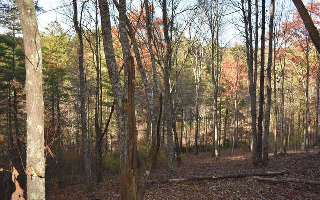 LT-46 Trillium Heights, Hayesville, NC 28904 (MLS #306462) :: RE/MAX Town & Country
