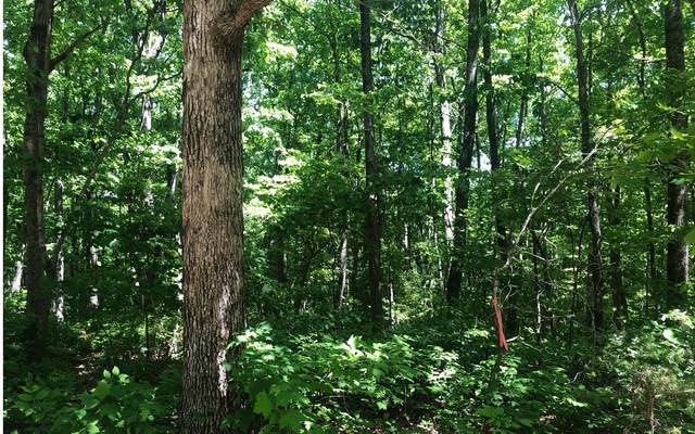 31A Farm View, Talking Rock, GA 30175 (MLS #306861) :: Path & Post Real Estate
