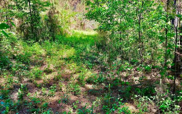LOT10 Eastview Trail, Ellijay, GA 30540 (MLS #306925) :: Path & Post Real Estate