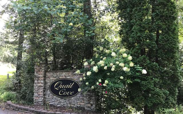 11A Snipe Hollow, Hayesville, NC 28904 (MLS #310763) :: Path & Post Real Estate