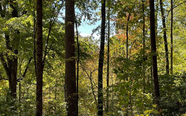 12B Grandview Drive, Hayesville, NC 28904 (MLS #311374) :: RE/MAX Town & Country