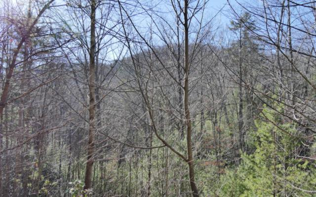 LOT 5 Black Bear Holler, Blue Ridge, GA 30513 (MLS #264967) :: RE/MAX Town & Country