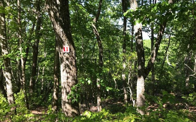 LT 11 Chatuge Crest, Hayesville, NC 28904 (MLS #267423) :: Path & Post Real Estate