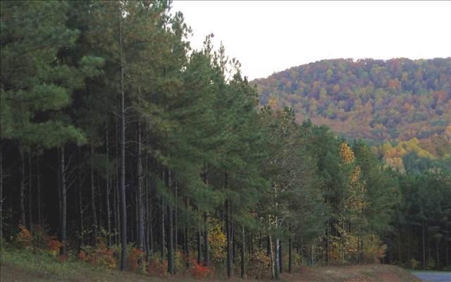 LT 14 Black Bear Ridge, Ellijay, GA 30536 (MLS #267767) :: RE/MAX Town & Country