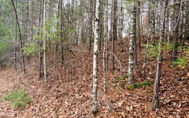 LT 14 Gray Fox Trail, Blairsville, GA 30512 (MLS #275572) :: RE/MAX Town & Country