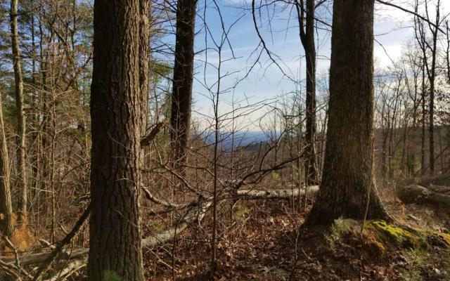55 Summit Pass, Chatsworth, GA 30540 (MLS #277327) :: RE/MAX Town & Country