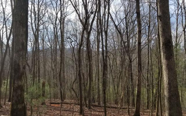 Shade Tree Lane, Mineral Bluff, GA 30559 (MLS #286497) :: RE/MAX Town & Country
