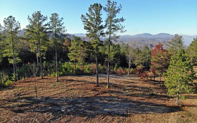 LT278 Thirteen Hundred, Blairsville, GA 30512 (MLS #293515) :: RE/MAX Town & Country