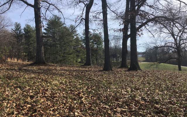 LOT61 The Arbor, Blairsville, GA 30512 (MLS #293933) :: RE/MAX Town & Country