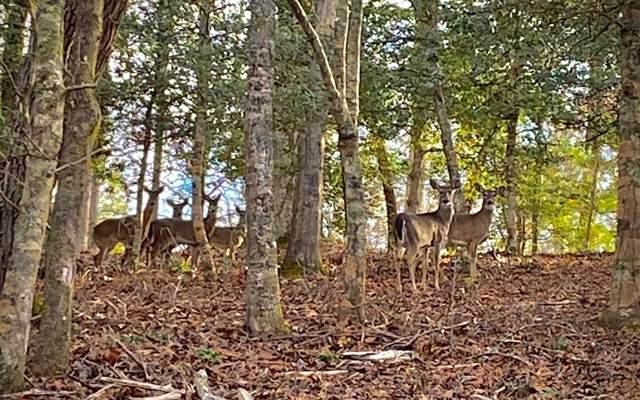 LOT13 Fox Crossing, Blairsville, GA 30512 (MLS #294946) :: RE/MAX Town & Country