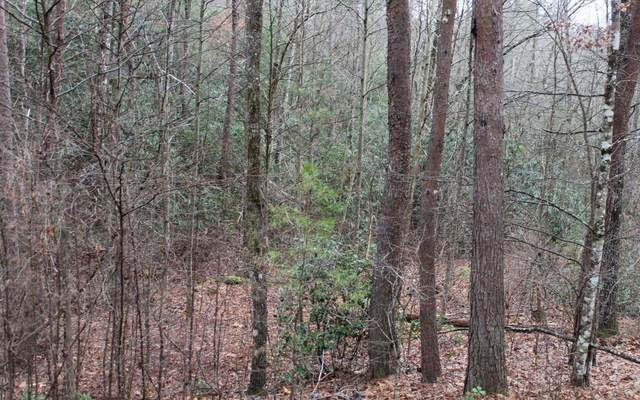 29 Coyote Cove, Hayesville, NC 28904 (MLS #295288) :: Path & Post Real Estate