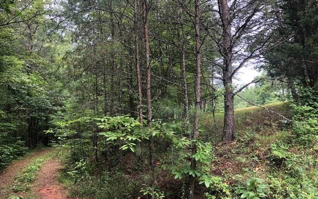 LT 16 Ivy Log Estates, Blairsville, GA 30512 (MLS #295336) :: RE/MAX Town & Country