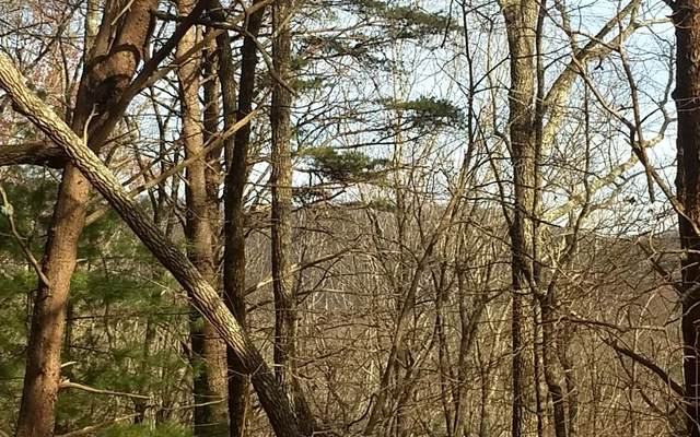 LOT 6 Fall Circle, East Ellijay, GA 30536 (MLS #302804) :: RE/MAX Town & Country