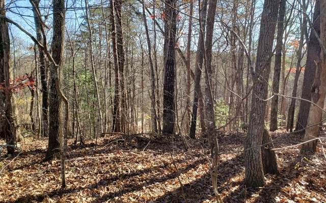 Campbell Camp Circle, Blue Ridge, GA 30513 (MLS #302807) :: RE/MAX Town & Country
