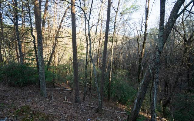 0 Brushy Top, Ellijay, GA 30540 (MLS #304468) :: Path & Post Real Estate
