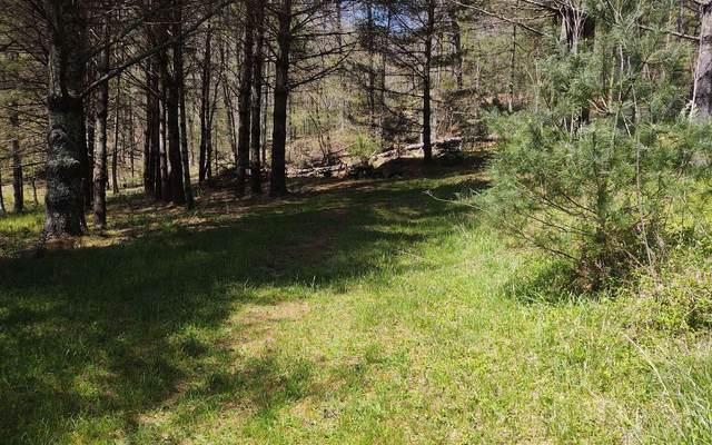 # 20 Spaniard Branch Tr, Hiawassee, GA 30546 (MLS #305956) :: Path & Post Real Estate