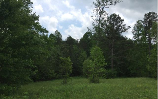 LOT 8 Little Sugar Creek, Blue Ridge, GA 30513 (MLS #275855) :: RE/MAX Town & Country